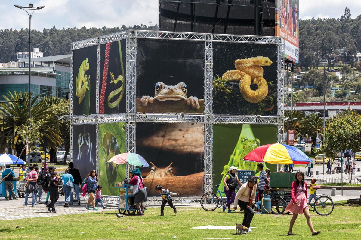Exposición colectiva Biodiversidad, FLUZ Quito, Secretaría de Cultura de Quito, 2015, Ecuador. Curaduría de Claudi Carreras.